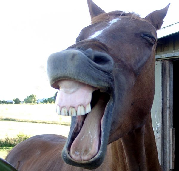 pictures of horses laughing